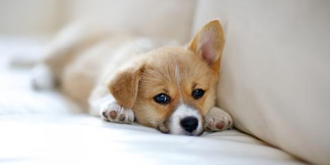 Top 3 Housekeeping Tips Every Pet Owner Should Know, ,