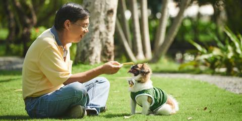 5 Dog Leashes to Consider for Your Next Walk, Ewa, Hawaii