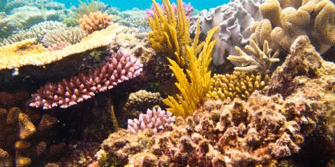What You Need to Know About Hawaii's Coral Reefs, Lahaina, Hawaii