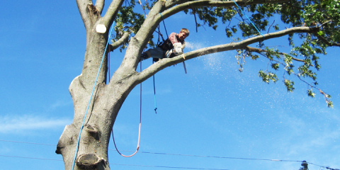 Why You Should Hire an Arborist for Your Tree Trimming, Planting, or Removal, Millersport, Ohio