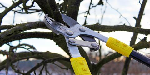 Why Is Winter the Ideal Time for Tree Pruning?, Godfrey, Illinois