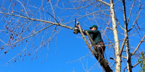 5 Benefits of Pruning Your Trees, Evansburg, Pennsylvania