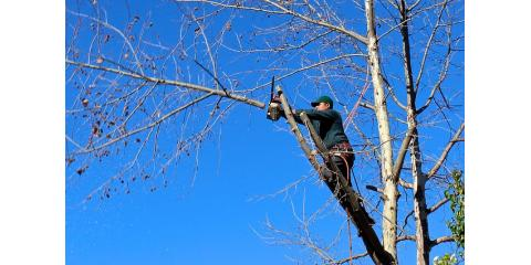 How to Prevent Costly Insurance Claims With Tree Trimming, Honolulu, Hawaii
