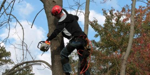 3 Reasons to Choose Professional Tree Limb Removal After a Storm, Loveland, Ohio