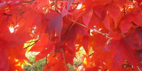 Fall To Do List, Delhi, Ohio