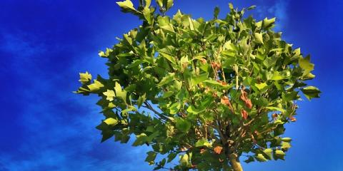 Summer Tree Care Tips From Hartford's Tree Service Providers, West Hartford, Connecticut