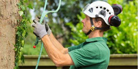 3 Benefits of Hiring a Tree & Landscaping Contractor, Waialua, Hawaii