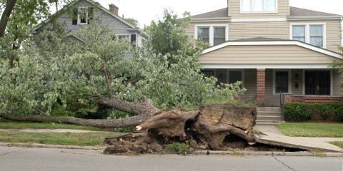 3 Ways to Spot a Potentially Hazardous Tree in Your Yard, Providence, North Carolina