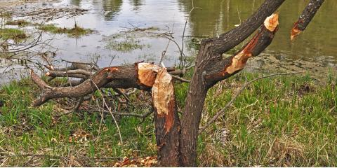 3 Reasons to Call a Tree Care Professional About Removing a Tree From Your Property, Brewster, New York