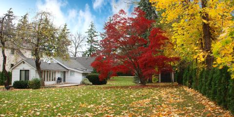 A Guide to Tree Care for Fall & Winter, Miamitown, Ohio