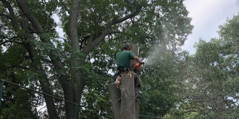 What You Need to Know About the Emerald Ash Borer, ,