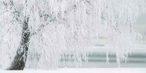 Tree Care: What Winter Freeze Does to Your Trees, College Station, Texas