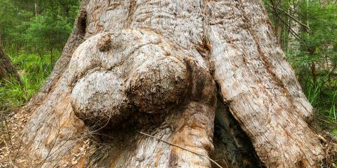 Common Questions About Tree Burls , Cincinnati, Ohio