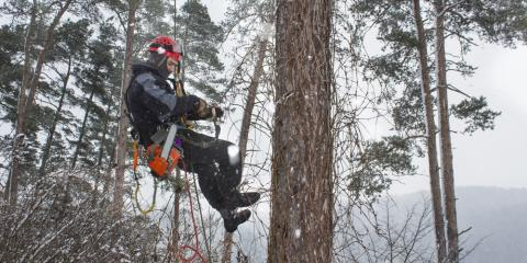 What You Should Look for in a Tree Care Company, Guilford, Connecticut