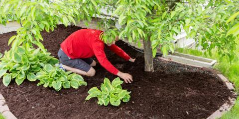3 Common Tree Care Mistakes, Honolulu, Hawaii