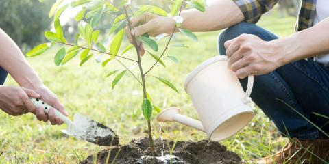 3 Tips to Prepare Your Yard for a New Tree, Honolulu, Hawaii