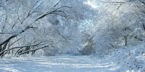 3 Tips to Protect Your Trees From Ice Damage, Newburgh, New York