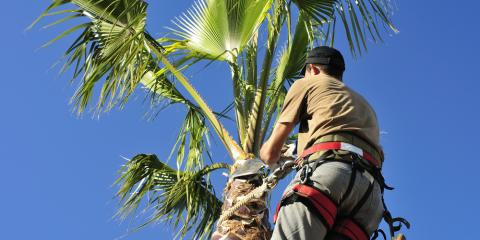 3 Advantages of Hiring a Professional Tree Care Service, Honolulu, Hawaii
