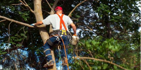 4 Times You Should Call Tree Care Professionals for a Trimming, Lexington-Fayette, Kentucky