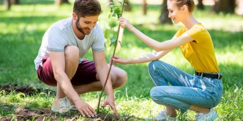 3 Tips for Planting & Caring for New Trees, Lincoln, Nebraska