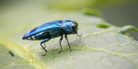 5 Signs Your Ash Trees Have Emerald Ash Borers, Lincoln, Nebraska