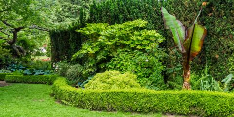 5 Low Maintenance Shrubs Bushes To Include In Your Landscaping Lincoln