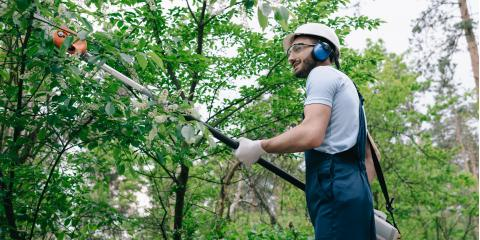 Why Is Your Tree Bleeding Sap?, Lincoln, Nebraska