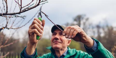 4 Tree Care Needs for Fall, Asheboro, North Carolina