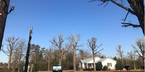 Top 3 Springtime Tree Service Tips, New London, North Carolina