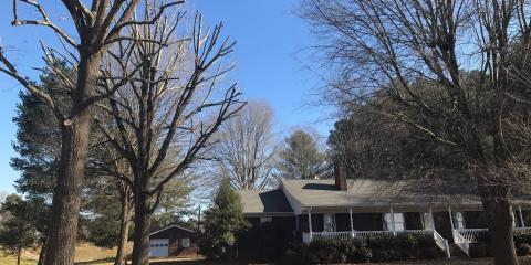 5 Preventative Summer Tree Care Projects, New London, North Carolina