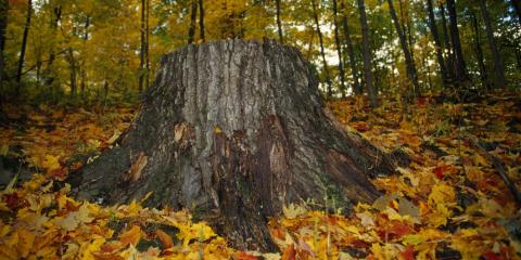 Tree Care Expert's 3 Tips for Deciding Between Stump Grinding or Removal, Tremont City, Ohio