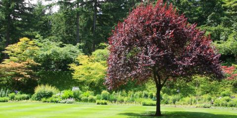 3 Tree Care Tips for Spring, North Huntingdon, Pennsylvania
