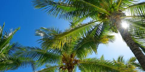 3 Interesting Facts About Palm Trees, Waialua, Hawaii