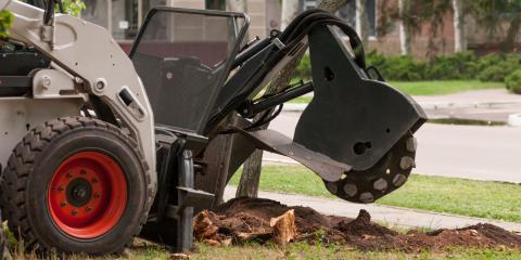 The Do's and Don'ts of Dealing With Diseased Trees, Wharton, New Jersey