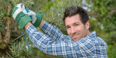 Top 5 Credentials to Look for in a Tree Service Company, Brewster, New York