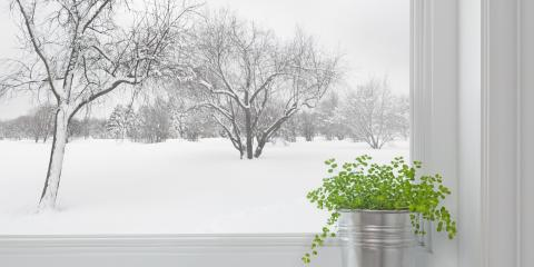 How to Protect Your Trees During Winter , Miamitown, Ohio