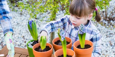 5 Tips for Growing Bulbs Indoors, Anchorage, Alaska