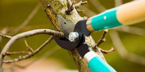 Your Guide to Tree Pruning, Brewster, New York