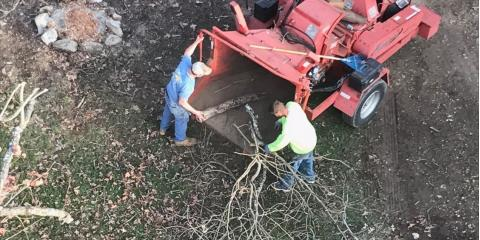 What Should You Expect From Your Tree Company? , New London, North Carolina