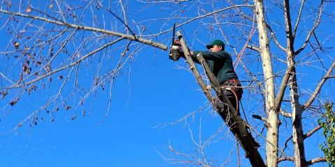 3 Reasons Why It's a Smart Idea to Hire Professional Arborists, West Hartford, Connecticut