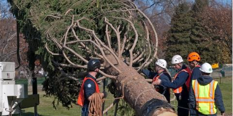 All Seasons Tree Care Brings Beautiful & Reliable Tree Services to Westchester Residents, Shrub Oak, New York