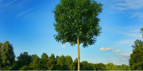5 Things to Consider When Choosing a Tree for Your Home, Dexter, Kentucky