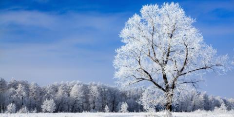 Learn How Trees Survive Winter With Tree Maintenance , Center City, Minnesota