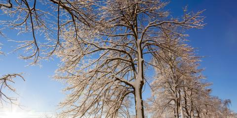 3 Winter Tree Maintenance & Care Tips, Florence, Kentucky