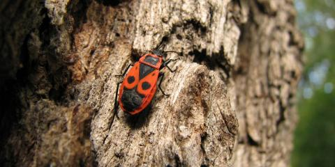 How to Stop Insects From Boring Into Your Trees, Marshan, Minnesota