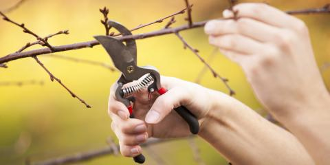 Tree Maintenance: What's Involved & Why It's Important for Your Property, Sparta, Georgia