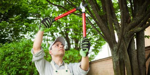 3 Key Benefits of Regular Tree Maintenance, Batavia, Ohio