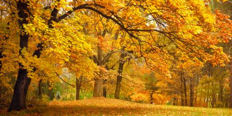 5 Tree Maintenance Tips for Homeowners , Florence, Kentucky