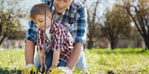 Top 3 Reasons to Plant a Tree in Your Yard, Anchorage, Alaska