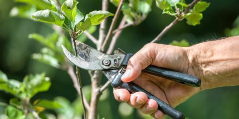 3 Reasons to Schedule Tree Pruning for Late Summer, Anchorage, Alaska